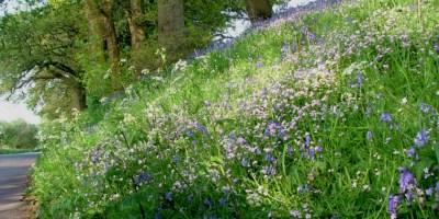 roadside-flowers-drayton-2005