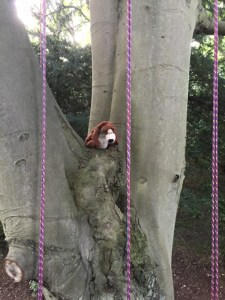Image of teddy-bear-in-fork-of-a-tall-tree