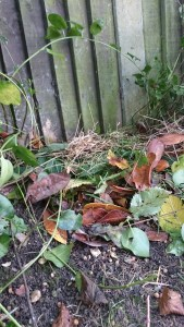 Pile of dry leaves and grass on soil next to fence
