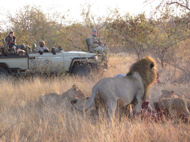 Image of jeep-in-long-grass-with-ranger-and-passengers-watching-lions-in-foreground