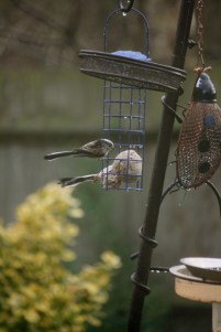 Image of two long-tailed-tits-on-feeder
