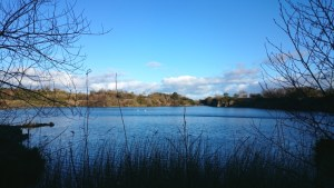 Image of quarry-lake-view-between-silhouetted-shrubs-and-reeds