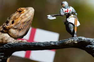 Image of Bearded Dragon on branch with St George figurine and Engad flag behind