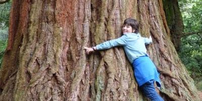 Image of boy hugging giant tree trunk