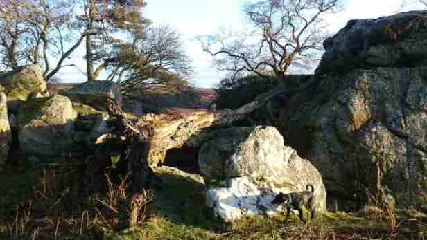 Image of black dog in front of boulder on rocky outcrop with bare trees behind