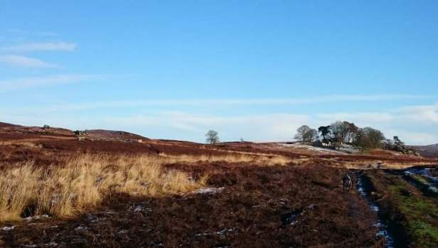Image of black dog on muddy track over moorland with stone cairn to left and ruined house in trees and crags on right