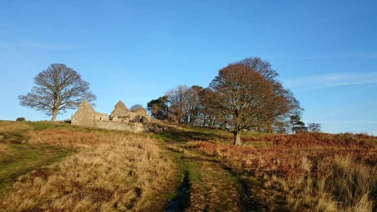Image of ruined building in clump of bare trees on moorland with blue sky