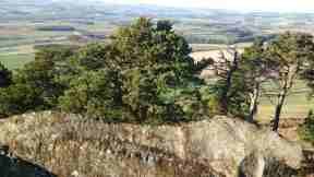 Image of view from large rock overlooking steep hill and pine trees on slope