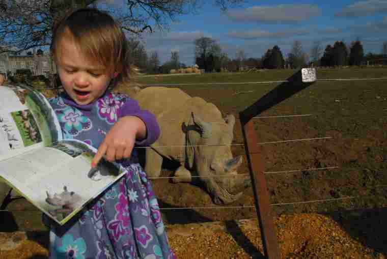 Image of toddler in purple dress pointing to picture of rhino in guide book with real life rhino in background at wildlife park