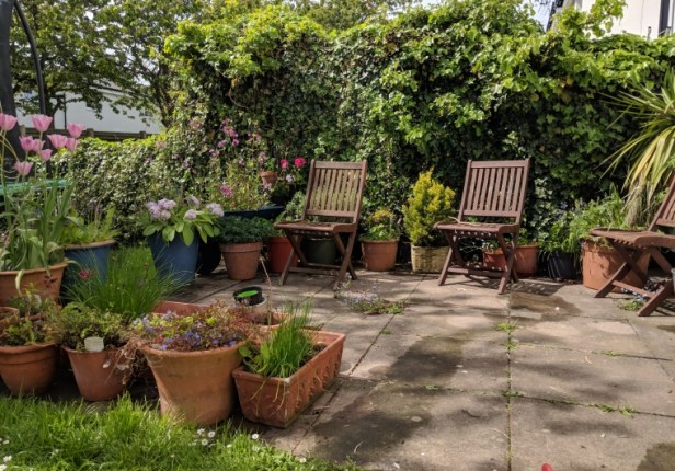Image of two wooden garden chairs on patio with flower pots around and ivy behind