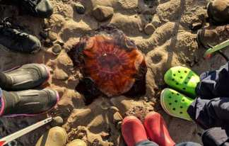 Image of red and orange jellyfish lying on sand with semi circle of feet and boots around it