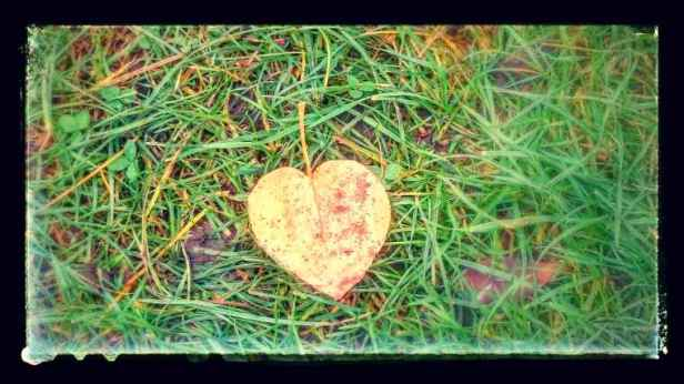 Image of heart shaped pale yellow leaf on grass with black photo border