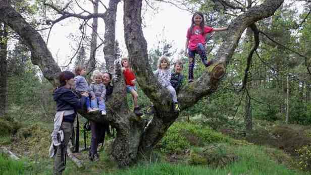 Image of group of children and toddlers climbing tree in woodland
