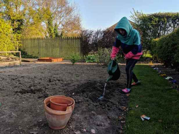 Image of girl pouring water from watering can onto soil in allotment vegetable patch