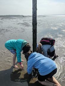 Image of 3 children bent around a wooden post in mudflats searching for fish