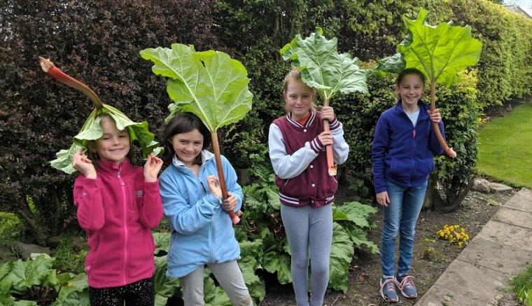 Image of 4 girls standing in rhubarb patch holding large rhubarb leaves as umbrellas with leafy green hedge behind