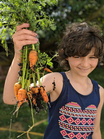 Image of smiling girl with dark hair and navy T-shirt holding up a bunch of freshly harvested carrots with soil and roots still attached