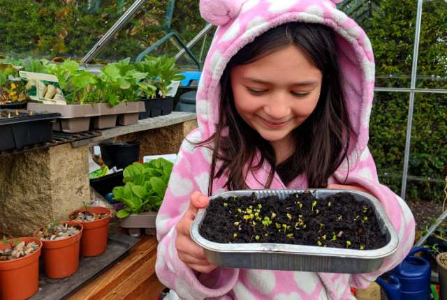 Microgreens How To Grow Astronaut Food At Home