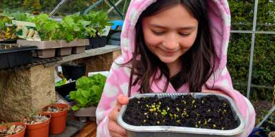 Smiling child in greenhouse holding tray of tiny sprouting microgreen seeds