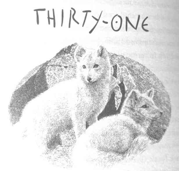Black and white illustration by Geoff Taylor of two arctic foxes with words thirty one above