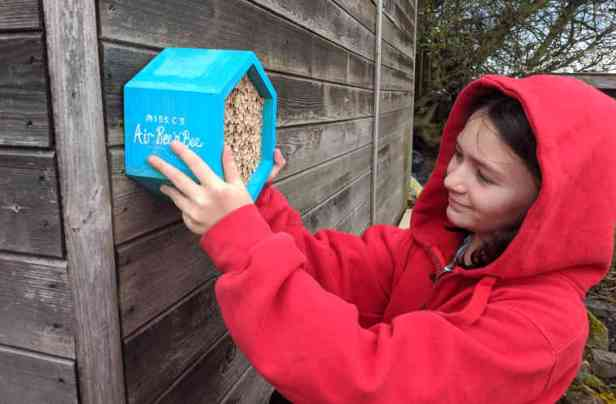 Girl in red hoodie hanging blue wooden bee hotel box onto shed wall