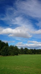 Green field with trees and blue sky and white clouds