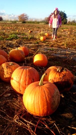 child-in-pumpkin-field