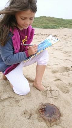 girl-on-beach-identifying-jellyfish