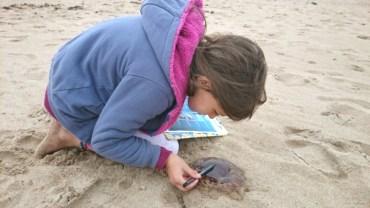 girl-on-beach-investigating-jellyfish