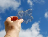 sycamore-skeleton-leaf-in-hand-behind-held-up-to-blue-sky-and-clouds