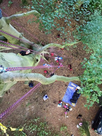 view-down-from-tall-tree-with-climbing-ropes