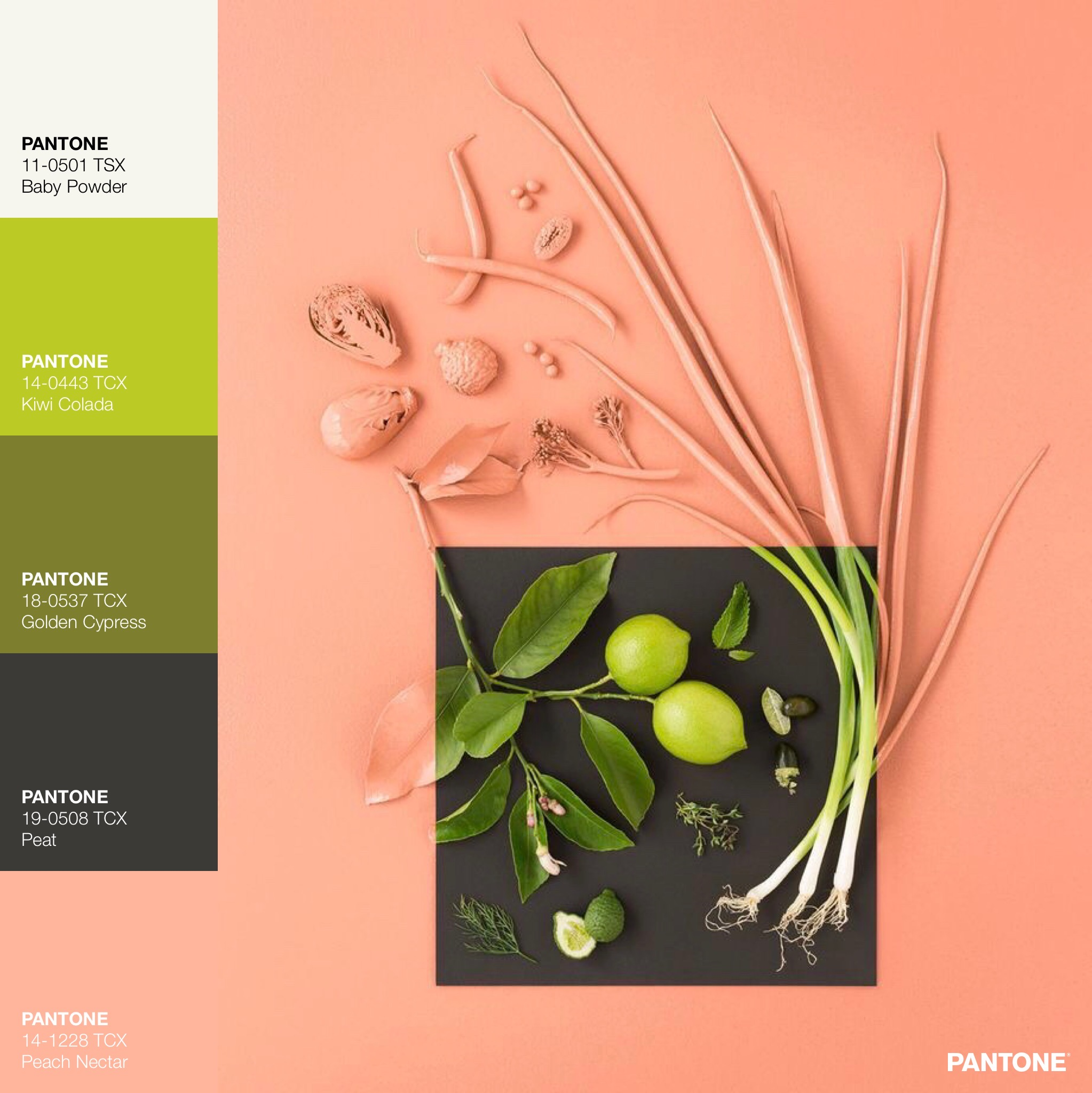 Coral Sprouts Color Palette