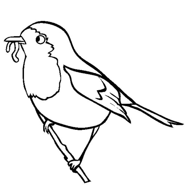 Robin Eating Worm Coloring Page Kids Play Color