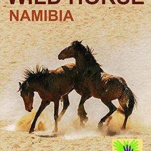 Wild-Horse-Namibia-0