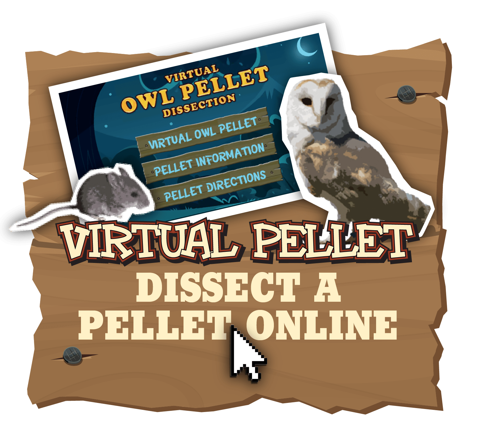Owl Pellet Dissection Lab Worksheet