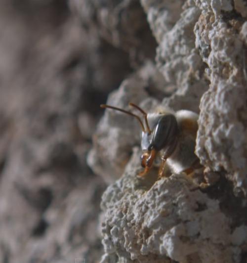 Mayan Beekeepers Honey- Kid World Citizen
