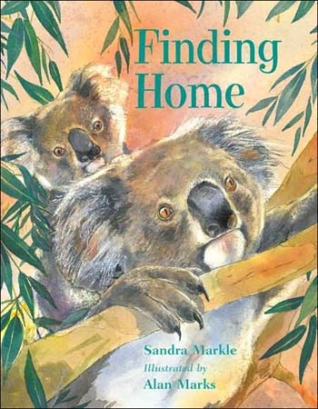 Finding Home Koala Book- Kid World Citizen