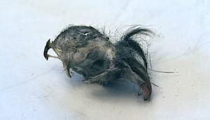 Mole Skull Owl Pellet- Kid World Citizen