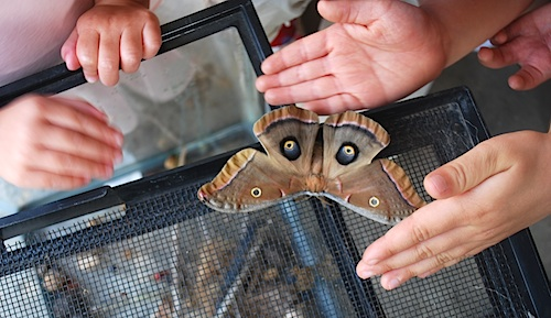 Huge Moth from Chrysalis- Kid World Citizen