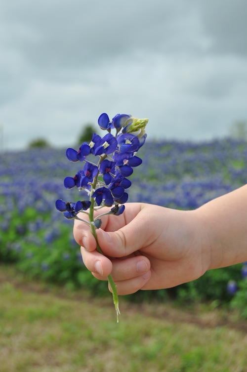 Texas Bluebonnets- Kid World Citizen