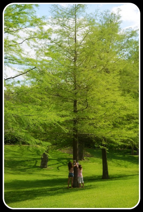 Tree Identification for Kids- Kid World Citizen