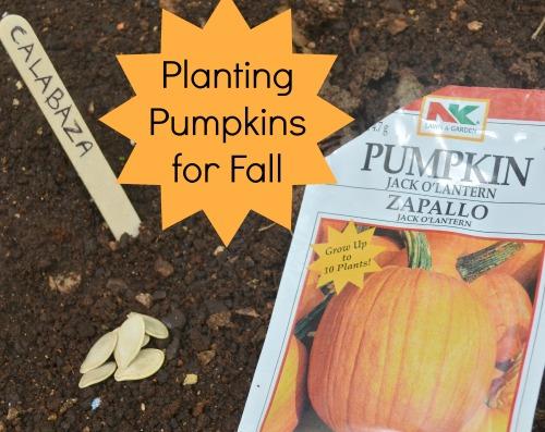 Planting Fall Pumpkins- Kid World Citizen