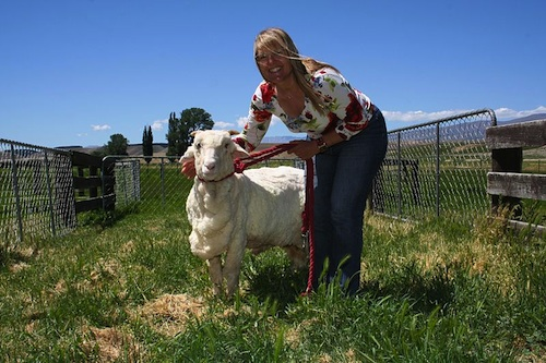 Shrek the Sheep from New Zealand- Kid World Citizen