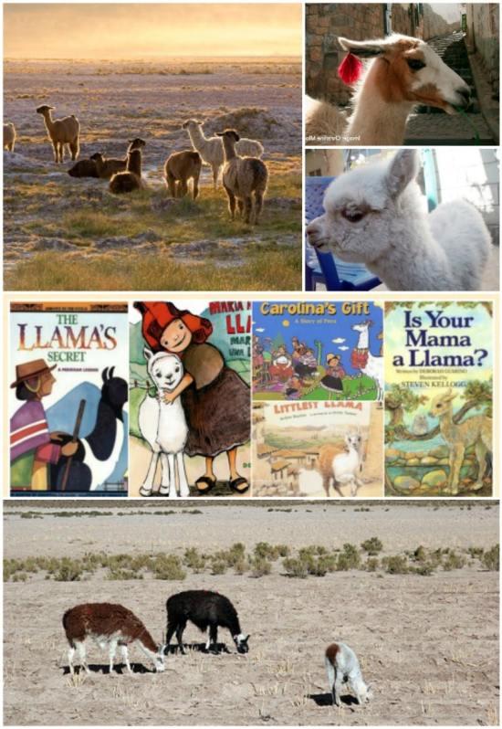 Learn about Llamas Kids- Kid World Citizen
