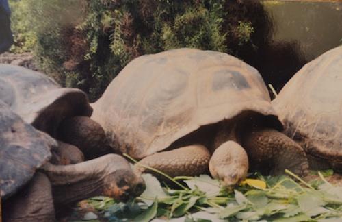 Galapagos Tortoises- Kid World Citizen