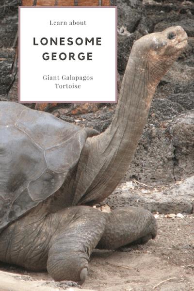 Lonesome George Tortoise- Kid World Citizen