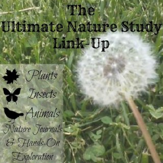 6 Awesome, Hands on Nature Activities + Nature Study Link-Up!