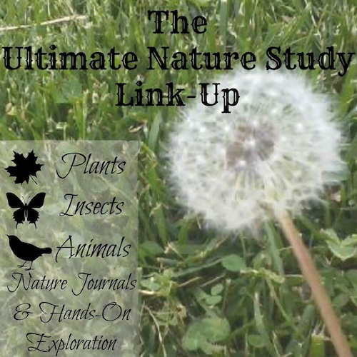 Nature Activities Link Up- Kid World Citizen