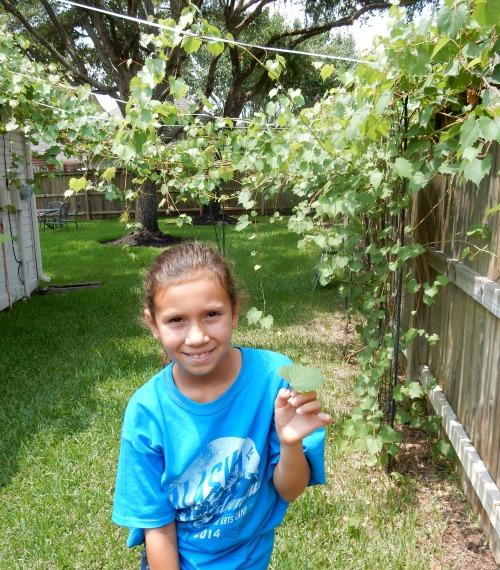 Picking Grape Leaves- Kid World Citizen