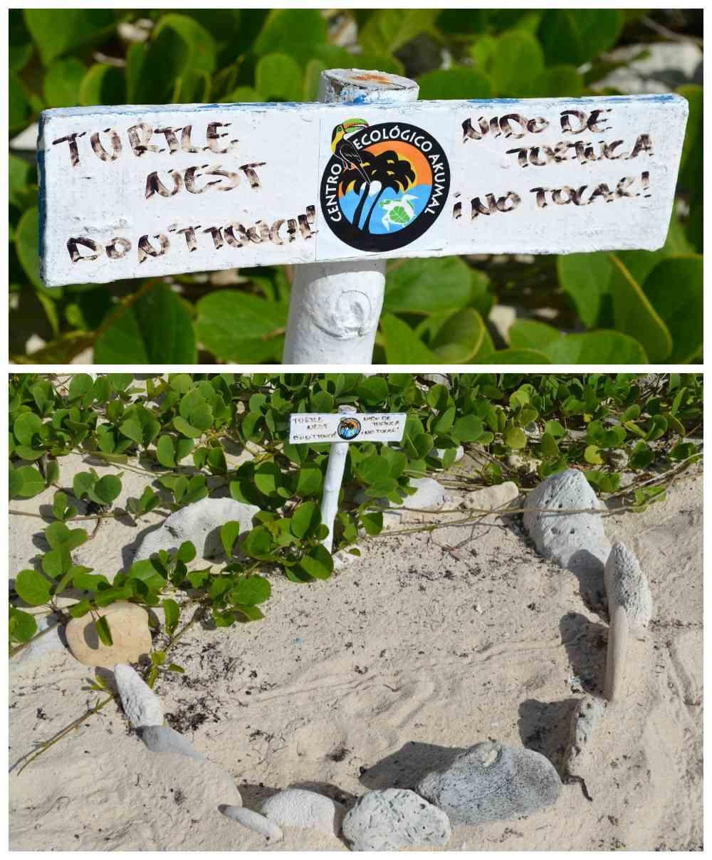 Sea Turtle Mexico Nest Akumal- Kid World Citizen